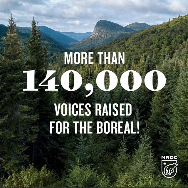 Exciting update! More than 140,000 of you (!) signed our petition calling on @Charmin and @proctergamble to stop destroying Canada's boreal forest, also known as the Amazon of the North. Thank you for joining us in calling on these companies to shift to a more sustainable model by using recycled materials and responsibly-sourced alternative fibers. They have the means to make these changes—and together, we're going to make sure they do. 🙌 🌲 💪 Want to add your voice and tell @charmin and @ProcterGamble to help save the boreal? Visit the link in our profile to take action!  #savetheboreal #charmin #proctergamble #canadaborealforest #borealforest #sustainability #climatechange