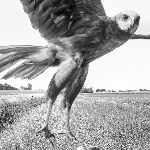"""The photographs in @stephen_gill_'s new book, """"The Pillar,"""" show birds in their purely natural state, as no humans were in the vicinity when the images were captured. As Karl Ove Knausgaard writes, this allows viewers """"to come to a new place, a new land—a birdland."""" Tap the link in our bio to see more photographs and read Knausgaard's response to them. Photographs by Stephen Gill."""