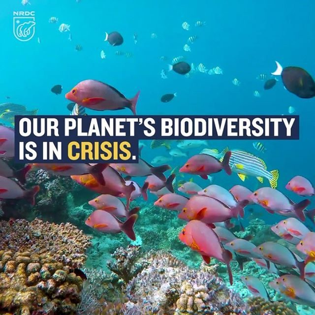 A bombshell United Nations report just gave us the grim truth about our planet's biodiversity: Up to one million plant and animal species are facing extinction—many within mere decades—due to human activities, including industrial agriculture, logging, mining, energy production, overfishing, climate change, and pollution. Our most treasured species are counting on all of us to take bold action, like permanently protecting 30 percent of our world's lands and oceans by 2030 and banning destructive trade in wildlife. And a crisis for nature is a crisis for humans, too, who rely on healthy ecosystems for abundant food, drinkable water, and clean air. Learn more via the link in our profile! _ #biodiversity #animals #wildlife #ecosystems #nature #environmentalism