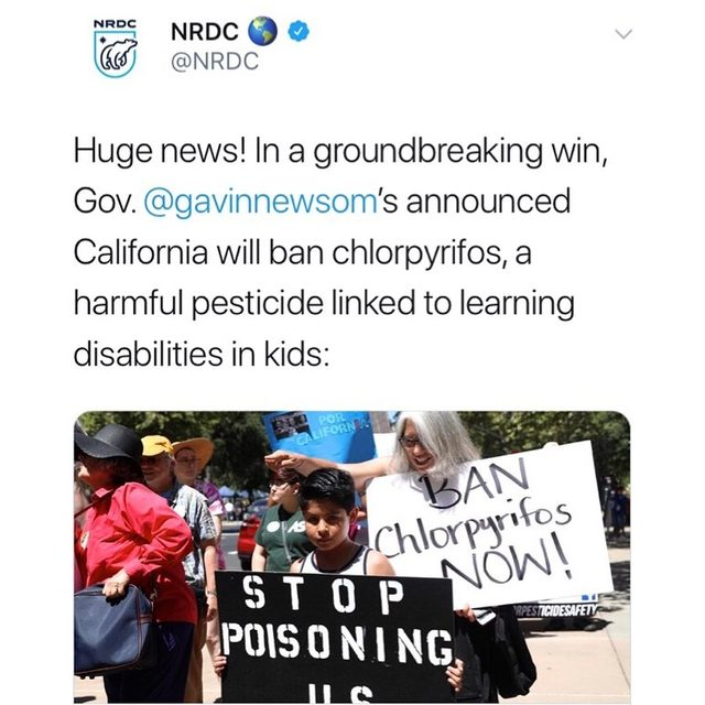 🙌 California has moved to ban chlorpyrifos! 🙌 This is a historic victory for children around the world, since California is an agricultural powerhouse and provides produce for consumers globally. Now it's up to @epagov to ban this chemical entirely! Visit the link in our bio to learn more. - #health #children #food #pesticides #farming #toxics #chlorpyrifos #california