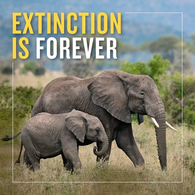 It's scary but true: We are now living through the sixth mass extinction event of the last half-billion years — with up to one million species at risk of extinction, according to a new report from the United Nations.  There's still time to stop the clock and save imperiled wildlife before we lose them forever, if we take bold steps to stop illegal poaching, habitat loss, climate change, and pollution — direct causes of species decline — as soon as possible. Take action now to support our work to save these species via the link in our bio! - #wildlife #extinction #animals #elephants #biodiversity #unitednations #conservation