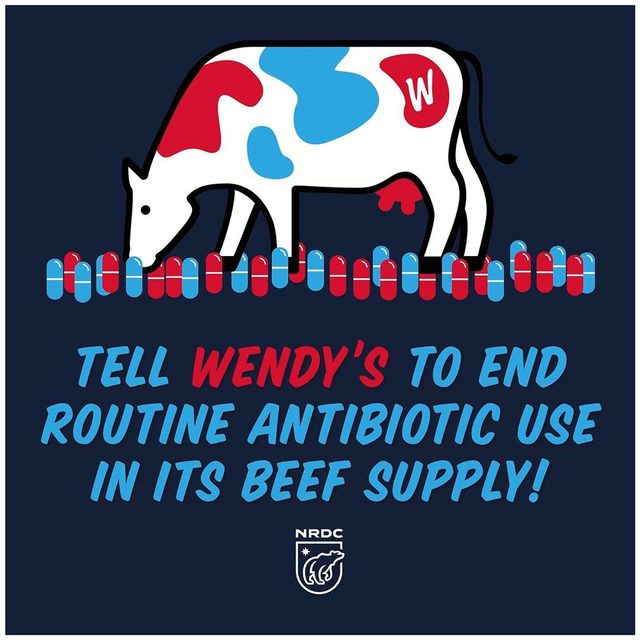 Antibiotic resistance is a massive global health threat. That's why it's time for @Wendys to follow their competitors' lead and end antibiotic overuse in its beef supplies. They *can and should* do this! The fast-food giant should immediately adopt a time-bound antibiotic use reduction policy for all its U.S. beef supplies that prohibits the routine use of all medically important antibiotics. Visit the link in our bio to tell @Wendys to get its beef supplies off drugs! 🐮  #wendys #antibiotics #antibioticresistance #amr #fastfood #publichealth
