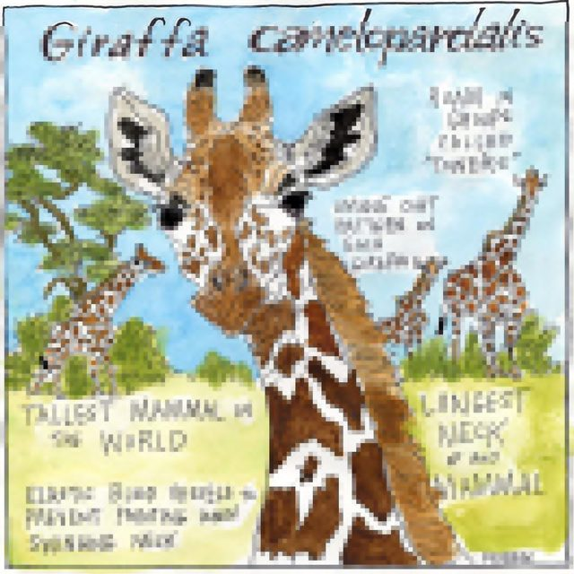 Happy #WorldGiraffeDay! 🦒 Giraffe populations have dropped 40% in the past 30 years—and they continue to face threats to their survival, from habitat destruction to a growing trade in their body parts to trophy hunting. We'll keep fighting for giraffe protections, and you can help by texting GIRAFFES to 21333, and by visiting the link in our profile to learn more! [Illustration by @experrinment] - #wildlife #animals #GiraffeDay #giraffe #stopextinction