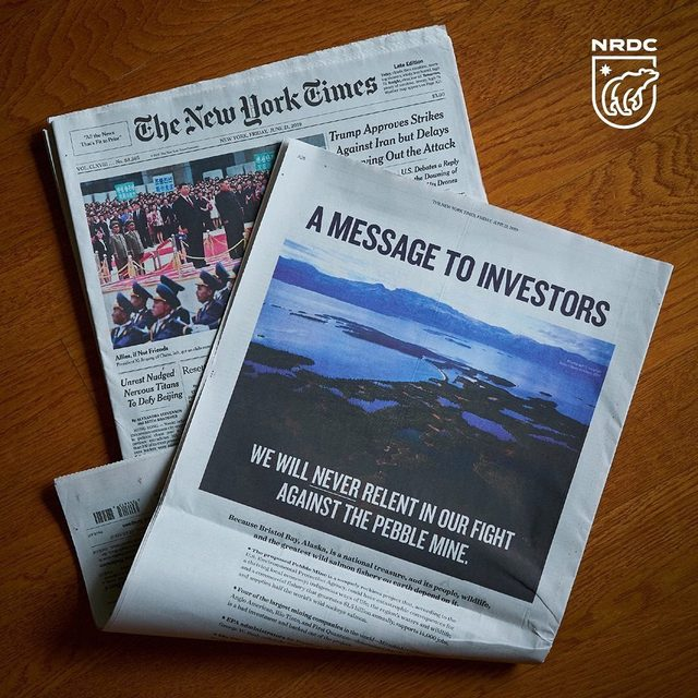 In today's @NYTimes, @NRDC_org along with a coalition of tribal and business owners are sending a message to investors: We will never stop fighting to protect Bristol Bay.  A giant gold and copper mine at the headwaters of Bristol Bay's legendary salmon runs is an ill-conceived project fraught with risks. It would put at risk a $1.5 billion annual sustainable commercial fishery that provides 14,000 jobs and supplies half of the world's sockeye salmon! Learn more about this fight at the link in our profile! #StopPebbleMine #Alaska #BristolBay #AlaskaWild