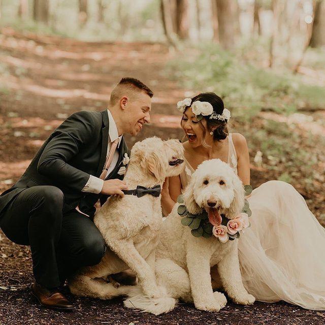 Bride & groom's best friends! 🐶 (tap to shop the Hearst Gown | #BHLDNbride @hoad__ 📷: @alora.rachelle)