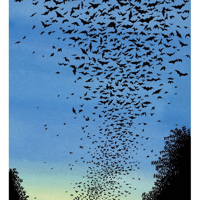 More than fifteen million Mexican free-tailed bats live, for part of the year, deep in the recesses of Bracken Cave, in southern Texas. The bats are so numerous that they appear on radar systems—great blobs popping up and hovering above Bracken Cave every night. In about the last two decades, the bats' spring migration to Texas—they spend their winters scattered across Mexico—has advanced by two weeks. Tap the link in our bio to read more about how rapid climate change is affecting the bats' behavior, and what it means for animals' extinction rates. Illustration by Ed Steed.