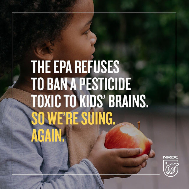 """The #EPA still refuses to ban chlorpyrifos—a pesticide linked to learning disabilities in children—from food in the United States. So we're suing. Again.  It's the second lawsuit we and our partner groups have filed against the EPA over the chemical since the Trump administration refused to take action in 2017. As NRDC senior scientist Miriam Rotkin-Ellman put it: """"We will not stand by while the Trump administration fights to keep this poison on the food we feed our kids. EPA knows this stuff is toxic—its own scientists have been sounding the alarm for years now—but this administration is shameless in its push to keep it on the market. We are urging the court to side with children over a powerful chemical industry with friends in high places. Chlorpyrifos does not belong on our food or in our fields."""" Learn more by visiting the link in our bio.  #environmentalprotectionagency #chlorpyrifos #pesticides #food #chemicals #toxics #science #health #publichealth"""