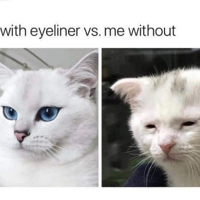 Happy #internationalcatday 🐱 Link in bio for the best waterproof / cry-proof eyeliners so you dont look like sad boy on the right here.