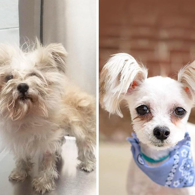 The best before and after makeover photos!! In honor of #NationalSpoilYourDogDay, these shelter dogs got groomed to help them get adopted and I'm so emotional 😭 Link in bio for more details on this amazing (and adorable) initiative.