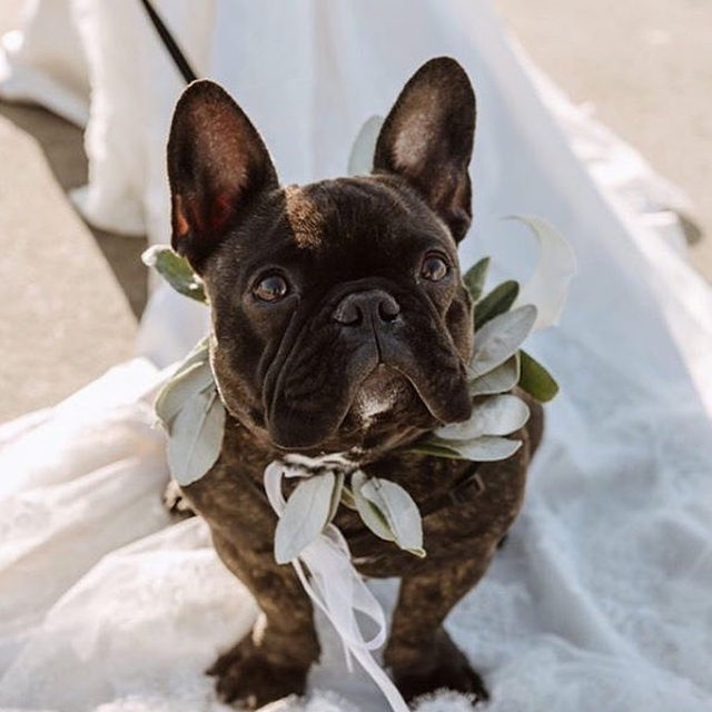 When the most pawwfect wedding guest is ready for his close-up... 🐶 Head to the #linkinbio for 59 (yes, really) of our favorite ways to include your pet in your special day! | 📸: @kaoverii_silva