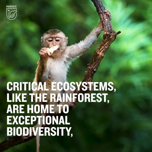 Some of our most biodiverse ecosystems, like the rainforest, are threatened by climate change—but they're also key tools for lessening that crisis. Healthy ecosystems, dense with plant life and living soil, absorb vast amounts of carbon from the atmosphere. Forests alone, home to everything from pollinators to apex predators, suck up nearly one-third of the total carbon emitted by humans annually. Calls to protect and restore 30 percent of the earth's land and oceans by 2030 act as a one-two punch against the intimately linked issues of extinction and climate change. Take action by visiting the link in our profile! - #animals #wildlife #biodiversity #rainforest #nature #climate #ActOnClimate #climatechange