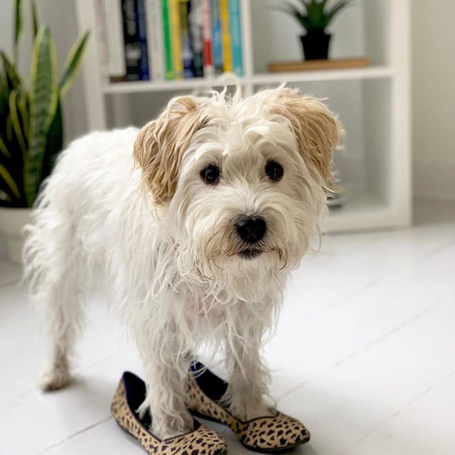 I'm ready for my walk. @thyme_is_honey #rothysinthewild