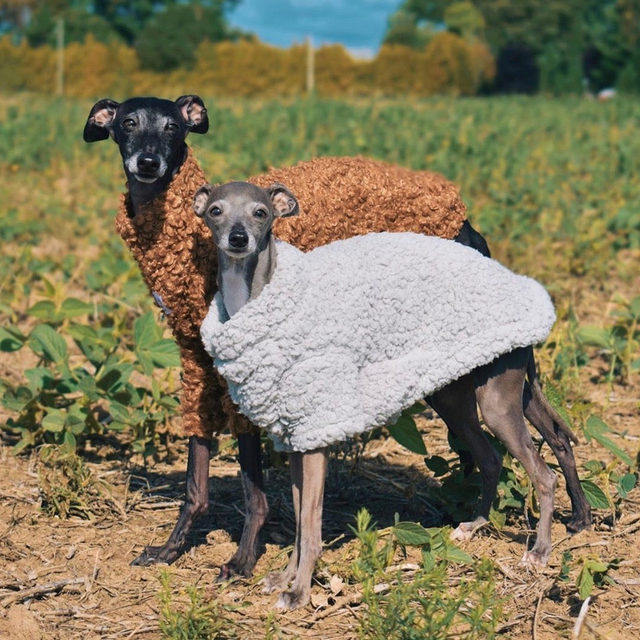 Live footage of you and your BFF in the Tessa Teddy Coat at your local pumpkin patch. @tigatheiggy @jugotheiggy