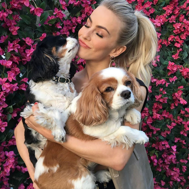 Julianne Hough is mourning the loss of her two dogs Lexi and Harley and if you followed her on Instagram, you probably are too. 😭 Link in bio for the heartbreaking tribute. (📷: Instagram)