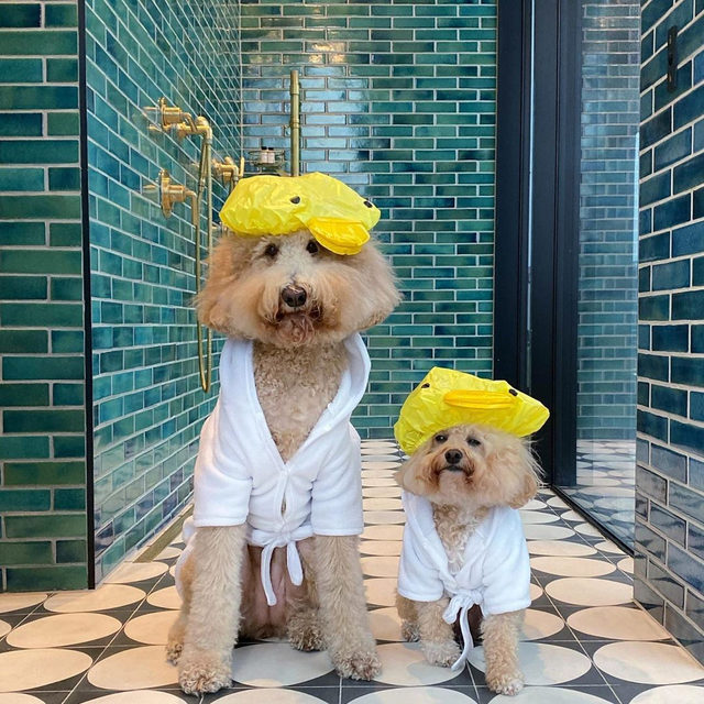 Only the best for my children 🧖‍♀️ Link in bio for the 15 softest, fluffiest bath towels you need right now. #regram @puppynamedcharlie