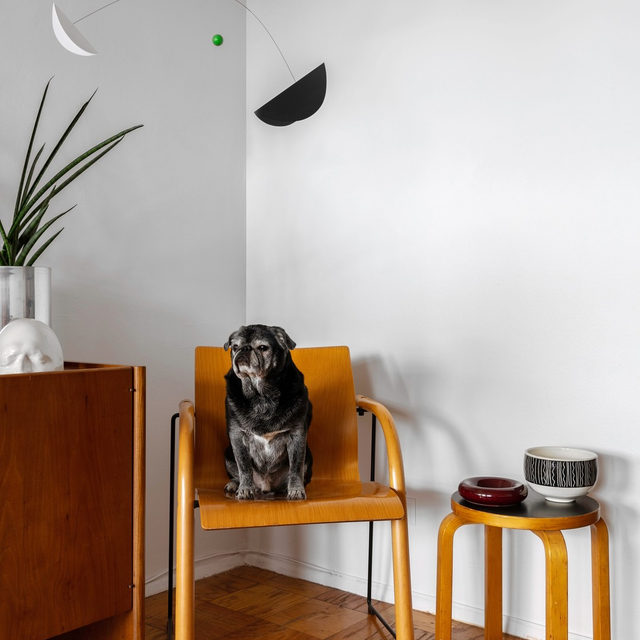 The best kind of roommate 🐕 Meet Squid the pug, who models a 1983 Thonet chair in the NYC apartment of @oddeyenyc's @taylorfimbrez 🤗 See more good boys and more great furniture from the space 👉 link in bio 📸 by @oharpaz ✍️ by @kv.jpg