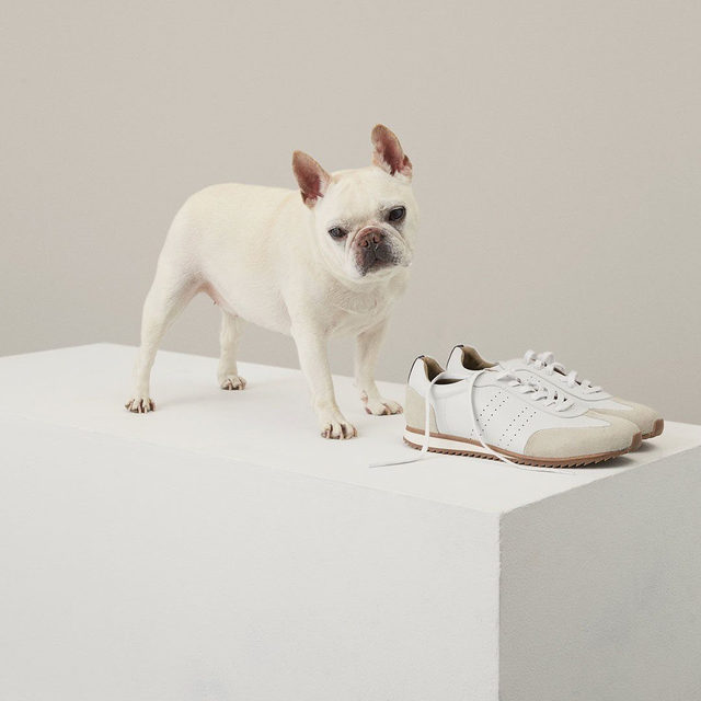 Dogs may be man's best friend, but a trusty pair of sneakers is a close second.