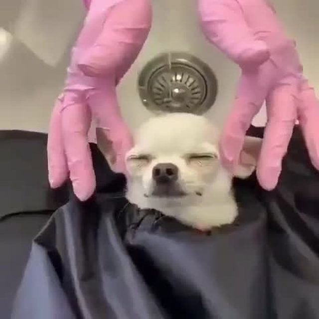 The $20 secret to make you feel the way this pup does. Discover it through our link in bio. #fpbeautyandwellness @mirandabysapo