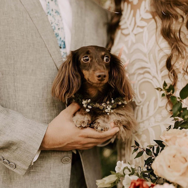 We're not saying this is the cutest flower girl we've ever seen, but we're not NOT saying it either. 😭🎀 Head to the #linkinbio for our favorite ways to include your pet in your wedding! | 📸: @bystephanievelez