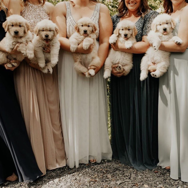 Good morning to everyone, but ESPECIALLY to brides who let their bridesmaids carry puppies down the aisle! 🐶 Head to the #linkinbio for 7 other things your girls can carry besides bouquets! | 📸: @maddiemellottphotography