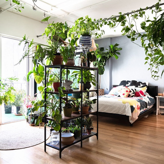 @alecisamazing's lush, urban oasis is home to 85+ plants 😍🌿 Head to the link in our bio to take a tour and peek inside.