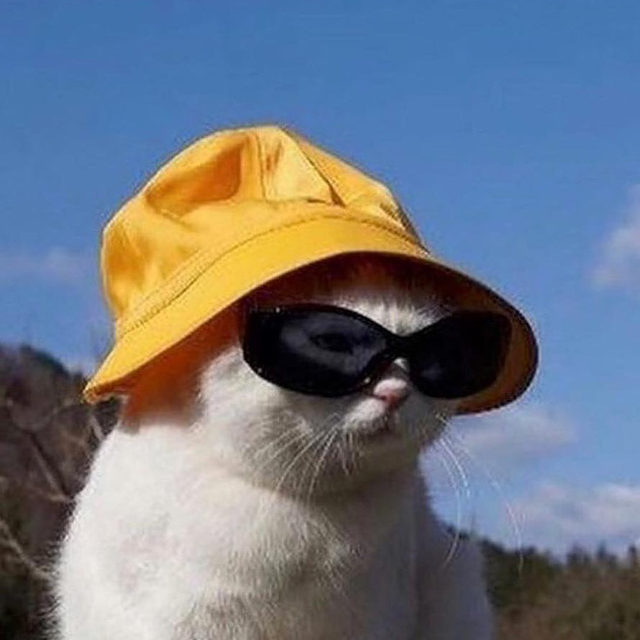 Finding the perfect summer hat isn't easy (unless you're this cat.) Link in bio for 25 styles that won't wear you. 🧢 #regram @smallsforcats