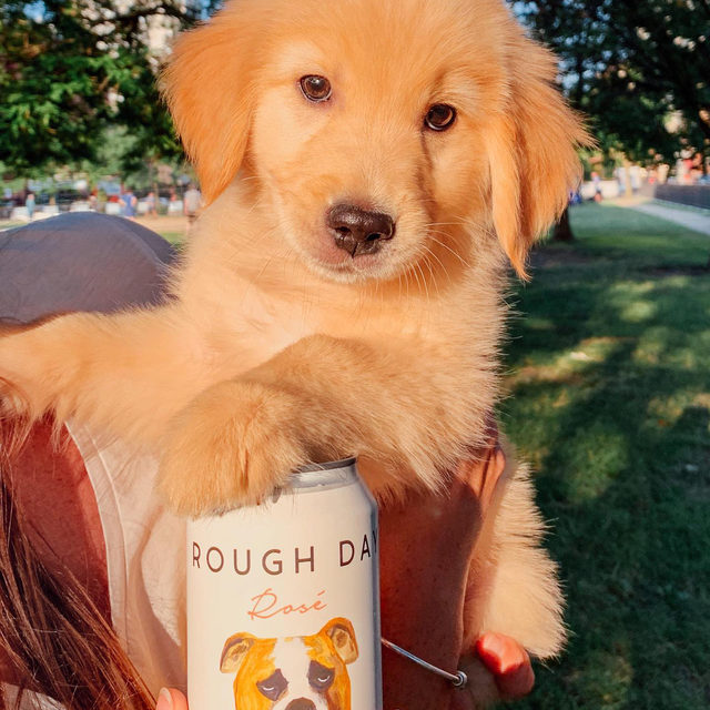 No such thing as a rough day when pups and Rosé are involved. Take a peek at our shelves to see our new selection of canned Rosé—perfect for BYOB or ya know, when you don't want to dirty a glass. feat: @chasethegoldenpup