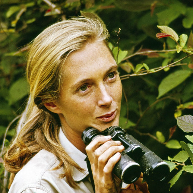 #JaneGoodall, the famed ethologist and conservationist, who first stepped into Tanzania's Gombe National Park to observe chimpanzees just more than 60 years ago, has been tucked away, hard at work, broadcasting her mission to millions of viewers across the globe, as well as putting the finishing touches on her new collaboration with the wellness brand @forestremedies: a kit of four essential oils—ginger and ylang ylang from Madagascar, citronella from Togo, and frankincense from Somaliland—of which a percentage of the proceeds will be donated to @janegoodallinst.  Tap the link in our bio to read Goodall's thoughts on the simple steps that we should all take to save the planet.