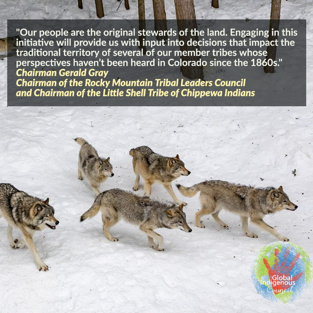 🏔️🐺🏔️ It's National Wolf Awareness Week! ⠀⠀⠀⠀ Traditional Ecological Knowledge (TEK) is derived from the deep connection that Indigenous Peoples have with the land and its ecological communities, and is intrinsically linked to Indigenous spirituality. Help us bring the wolf home to Colorado. Help us restore the balance for future generations!  ⠀⠀⠀⠀ NRDC stands with tribal organizations and leaders including the Global Indigenous Council in endorsing #YesOn114, the Colorado ballot initiative on wolf reintroduction.  ⠀⠀⠀⠀ ➡️ Follow the link in bio to learn more.  ⠀⠀⠀⠀ #RestoretheHowl  #YesOn114  #GlobalIndigenousCouncil