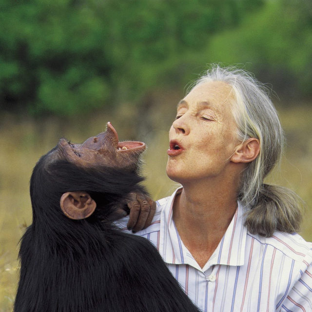 Exercisers Who Inspire Us: Jane Goodall.   She's one of our greatest inspirations - she's going on over 60 years of intensive conservation and environmental work, inspiring a deeper understanding of Earth as a precious, fragile playground for human and animal kind alike.   Thank you, Jane 💙