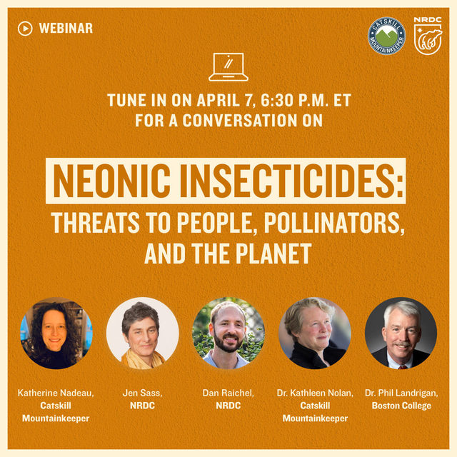 Neonicotinoids are toxic insecticides used in seed coatings and sprayed on crops. 🌱 Though they're meant to kill pests, they actually pervade the plants, land, and water they touch.💧 Neonics are a main killer of bees and birds, and more and more research points to their ability to harm humans. 👶🏽  Join us for an evening with the experts to learn more about the chemicals, how and why they're used, how they impact people and the world around us, and what you can do about it.   💻 Visit the link in our bio to RSVP!  [Image description: Invitation that reads: Tune in on April 7, 6:30 P.M. ET for a conversation on Neonic Insecticides: threats to people, pollinators, and the planet. Panelists with headshots line the bottom of the graphic. From left to right: Katherine Nadeau, Catskill Mountainkeeper; Jen Sass, NRDC; Dan Raichel, NRDC; Dr. Kathleen Nolan, Catskill Mountainkeeper; Dr. Phil Landrigran, Boston College.]