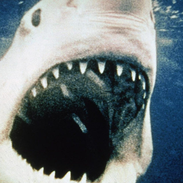 Dun nun…dun nun….Jaws showed music's ability to convey terror, chilling viewers to their cores. Read why it's one of the best movie scores of all time in the bio link.  📷 by Universal Pictures/Courtesy of Getty Images  #jaws #film #soundtracks #oscars